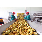 Agriculture Products Processing